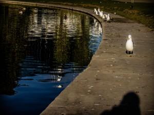 Patos y aves junto a un estanque