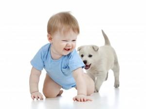 Bebé jugando con un cachorro