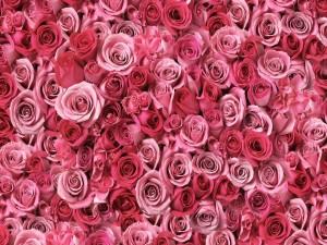 Imagen cubierta de rosas