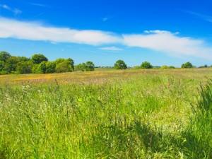 Campo verde en un día de verano