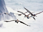 Grupo de pelícanos volando sobre el mar