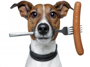 Perro sosteniendo en la boca un tenedor con una salchicha