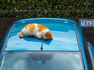 Gato durmiendo sobre un coche