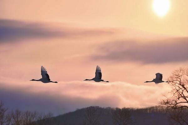 Grullas volando en un bonito cielo