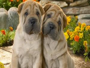 Cachorros sentados en un jardín