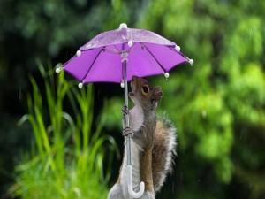 Ardilla sosteniendo un paraguas púrpura