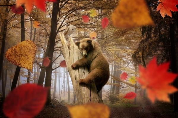 Lechuza observando a un oso