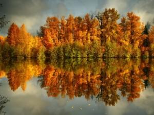 Árboles otoñales reflejados en el agua