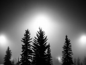 Potentes focos de luz sobre unos pinos