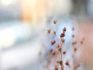 Ramas con flores secas