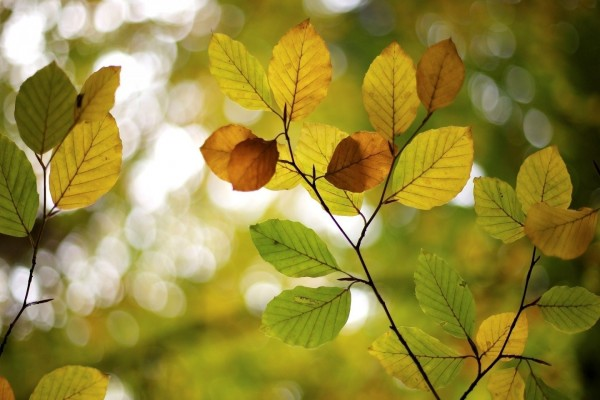Hojas verdes y marrones en unas ramas