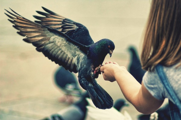 Paloma posada en la mano de una niña