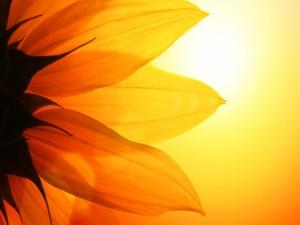 Flor absorbiendo los rayos del sol