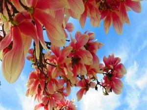 Hermosas flores bajo un cielo azul