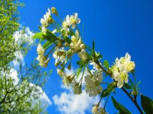 Rama con flores bajo un cielo azul