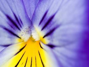 Interior de una flor