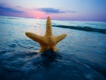 Estrella de mar en la superficie