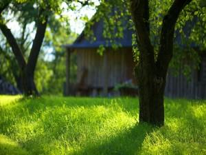 Árboles sobre la hierba verde