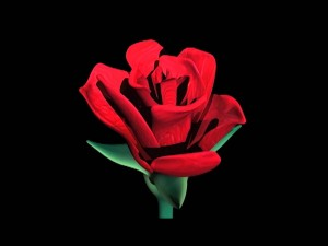 Rosa digital