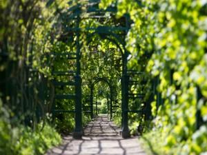 Paseo por un verde jardín