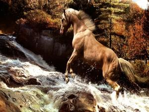Caballo galopando por las piedras de un río