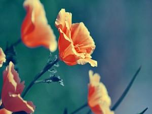 Bonitas flores