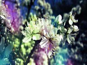 Floración en las ramas de un árbol