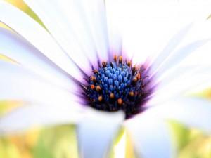 Centro de una bonita flor blanca
