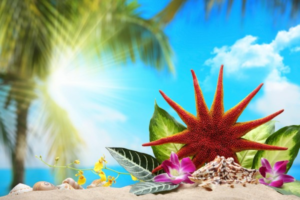 Estrella de mar y conchas en una playa tropical