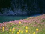 Flores silvestres junto a un río