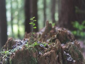 Planta creciendo en un bosque