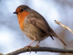 Pájaro sobre una rama