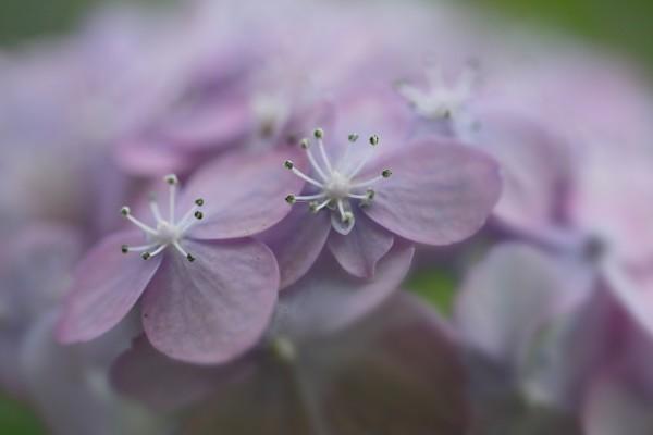 Florecillas de color lila