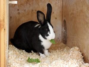 Conejo comiendo una hoja verde
