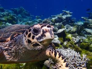 Una tortuga marina en el fondo del mar