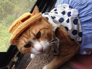 Una gata con vestido y sombrero