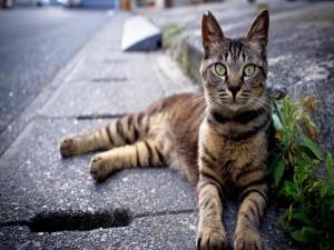 Gato tumbado en una acera