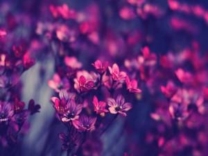 Pequeñas flores de color rosa