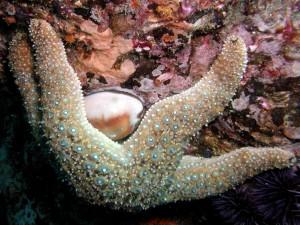 Estrella de mar sobre una roca