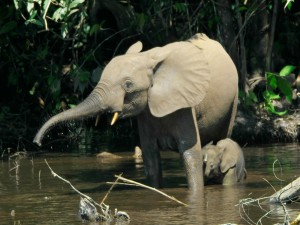 Pequeño elefante dándose un baño junto a su madre