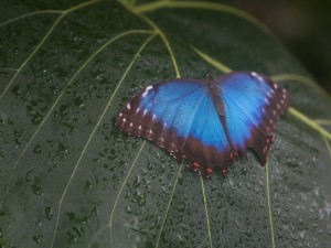 Mariposa sobre una hoja mojada