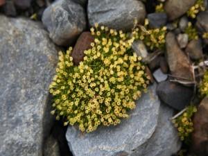 Flores amarillas creciendo entre unas piedras