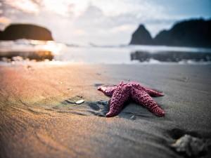 Estrella de mar sobre la arena de una playa