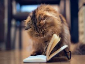 Gato ojeando un cuaderno
