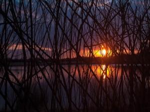 El sol tras las ramas secas