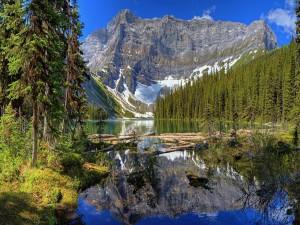 Troncos en un lago de montaña