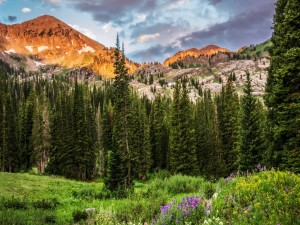 Bosque al pie de las montañas