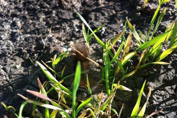 Oruga en la hierba