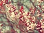 Floración en primavera