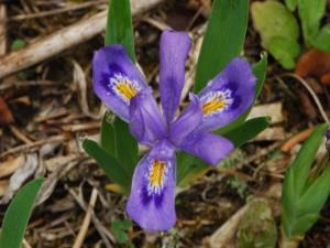 Un bonito iris con gotas de rocío